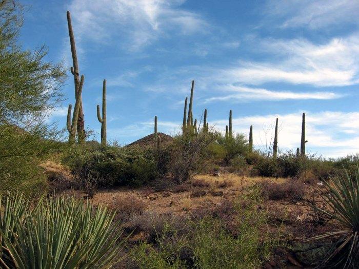 atypical arizona
