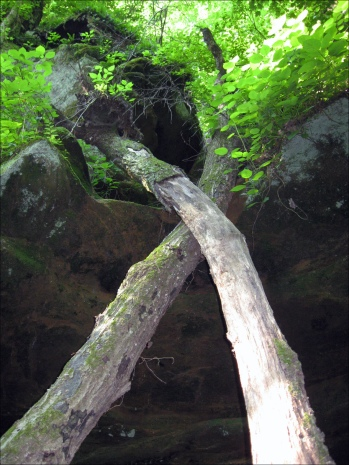 beaversbluff3