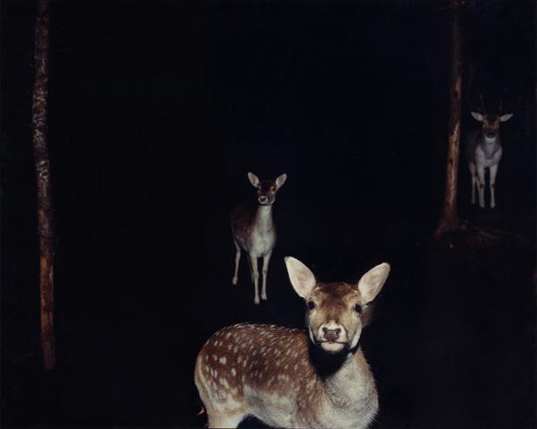 Deer at night, Jocelyn Lee